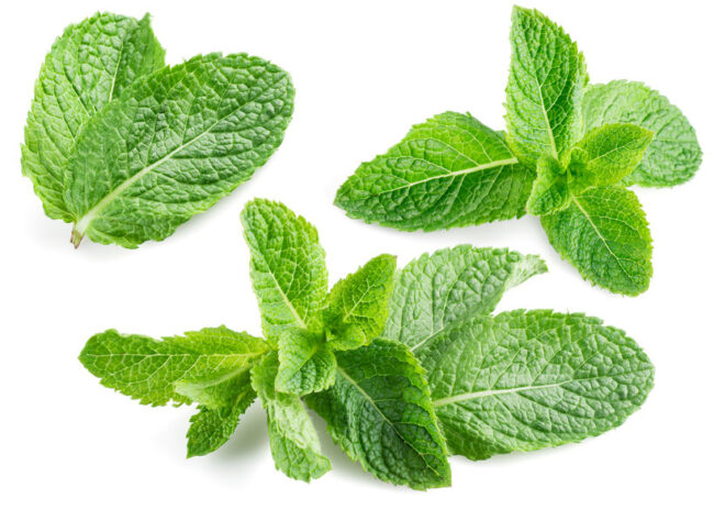 Mint smoking in nicotine-free cigarettes